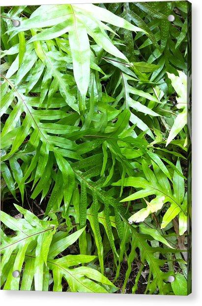 Hawaiian Foliage Acrylic Print