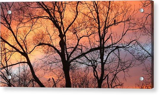 Hawk At Sunrise Acrylic Print