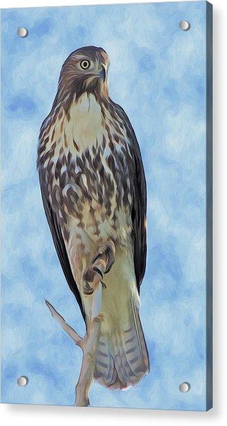 Hawk By Frank Lee Hawkins Acrylic Print