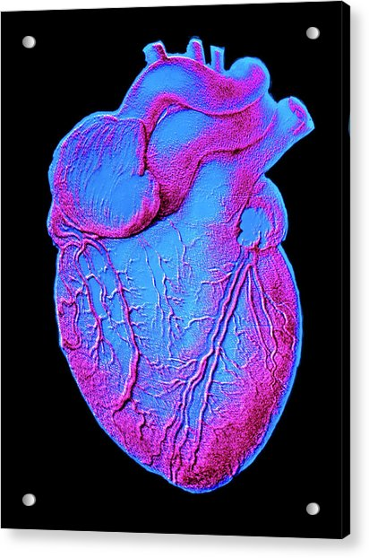 Heart Artwork Acrylic Print by Alain Pol, Ism/science Photo Library