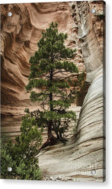 Heart Of The Canyon Acrylic Print