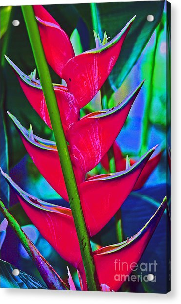 Heliconia Abstract Acrylic Print
