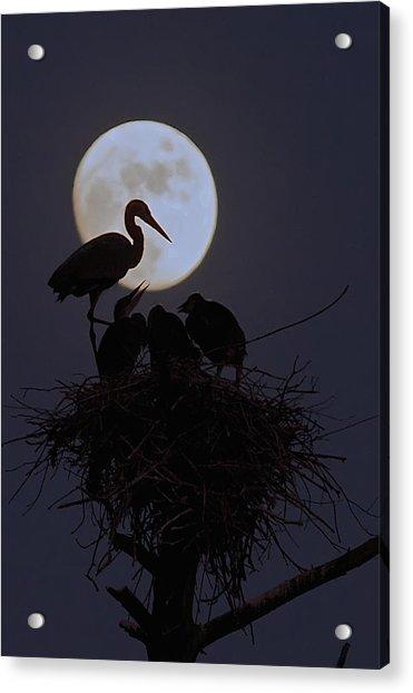 Heron Nest With Full Moon Acrylic Print