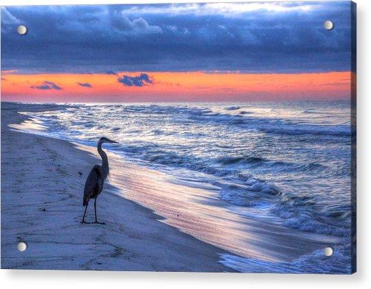 Heron On Mobile Beach Acrylic Print