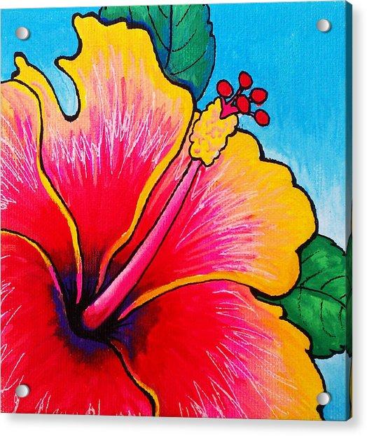Hibiscus 01 Acrylic Print