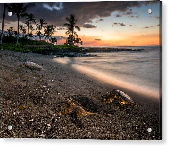 Honu Sunset Acrylic Print by Robert Yone