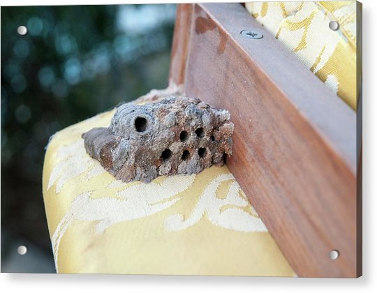 Hornet's Nest Built Under A Chair Acrylic Print