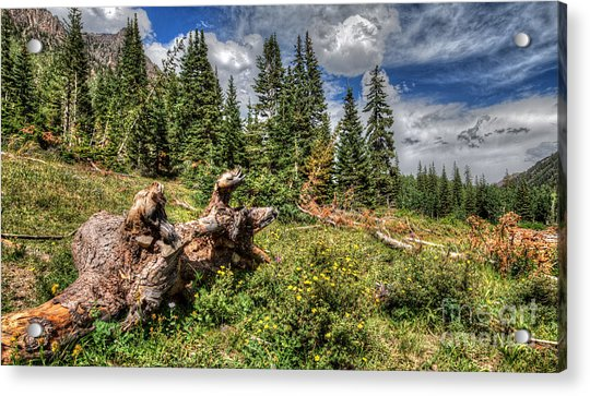 Horse Face Root Acrylic Print