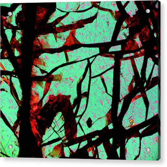 Huckita  Acrylic Print