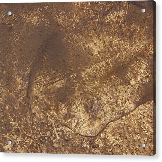 Ice Leaf Acrylic Print