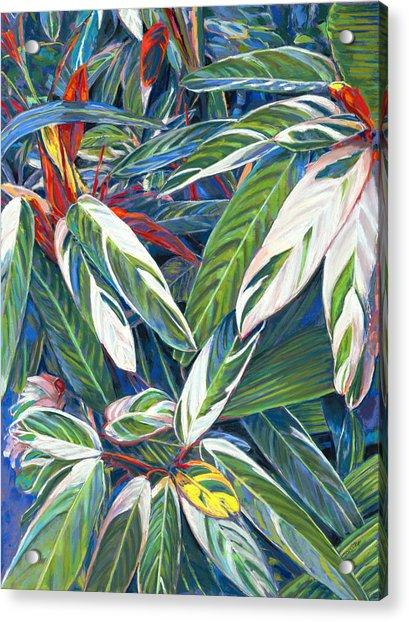 Stromanthe Sanguinea Acrylic Print