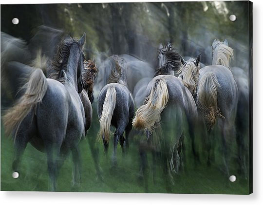 In The Gallop Acrylic Print by Milan Malovrh