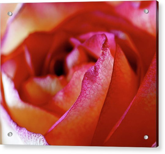 Acrylic Print featuring the photograph Inside Edge by Rona Black