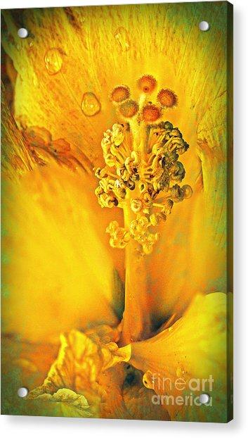 Inside The Hibiscus Acrylic Print