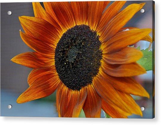Isabella Sun Acrylic Print