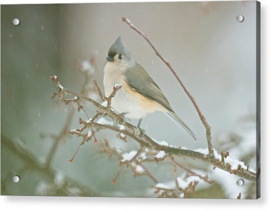 It May Be Cold But I Still Have My Looks Acrylic Print