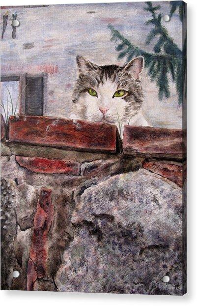 Italian Cat Acrylic Print by Karen Peterson