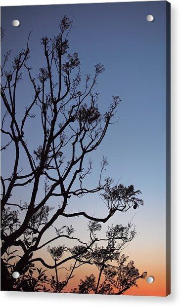 Acrylic Print featuring the photograph Jacaranda Sunset by Rona Black