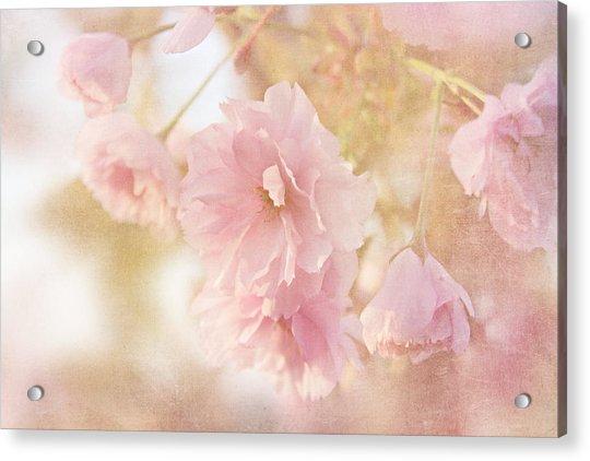 Japanese Ornamental Cherry Acrylic Print