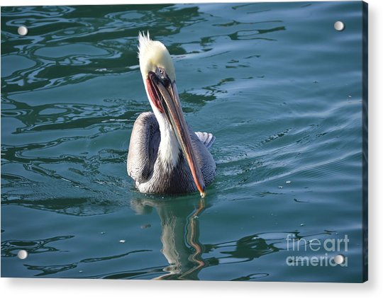 Acrylic Print featuring the photograph Just Wading by Laurie Lundquist