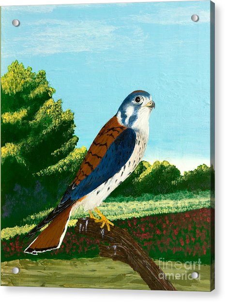 Kestrel And Flowers Acrylic Print