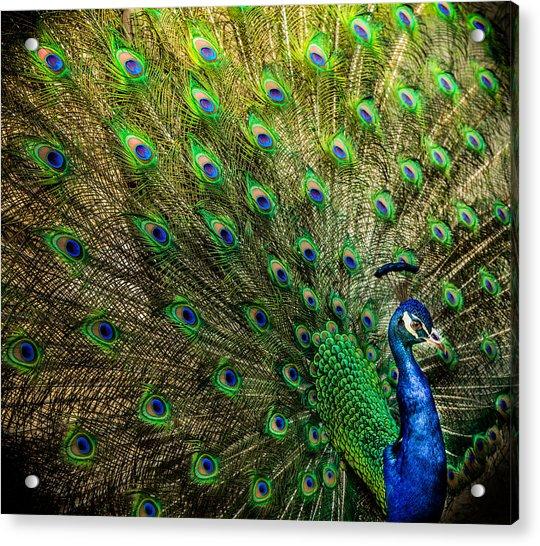 King Of Birds Acrylic Print