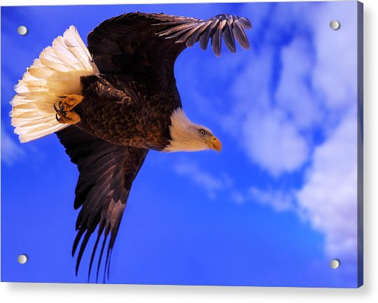 King Of The Sky Acrylic Print