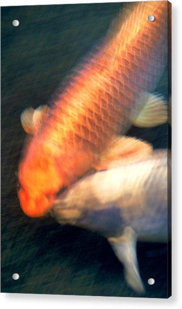 Kissing Koi Acrylic Print