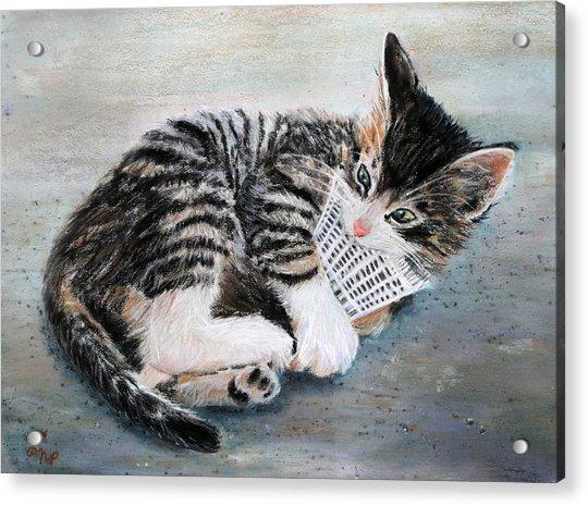 Kitten With Birdie Acrylic Print