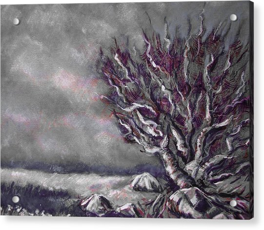 Knarly Tree Acrylic Print by Jon Shepodd