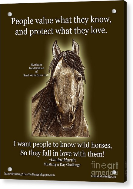 Know Wild Horses Poster-huricane Acrylic Print