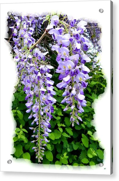 Lake Country Wisteria Acrylic Print