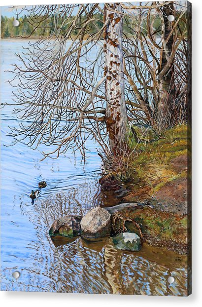 Lake Padden - View Near Scott Memorial Bench Acrylic Print