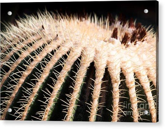 Large Cactus Ball Acrylic Print