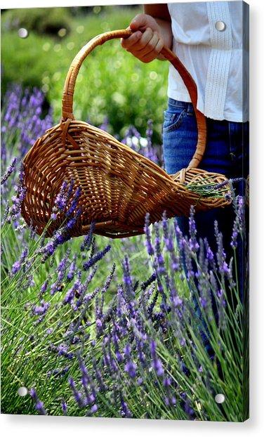 Lavender And Basket Acrylic Print