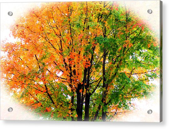 Acrylic Print featuring the photograph Leaves Changing Colors by Cynthia Guinn