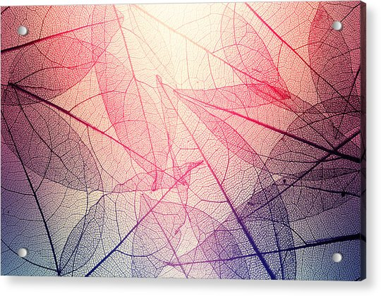 Leaves Skeleton Background Acrylic Print by Andrey Danilovich