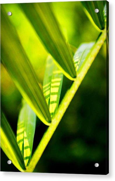 Light On Leaves Acrylic Print
