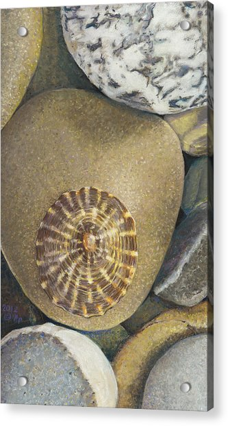 Limpet Shell Acrylic Print