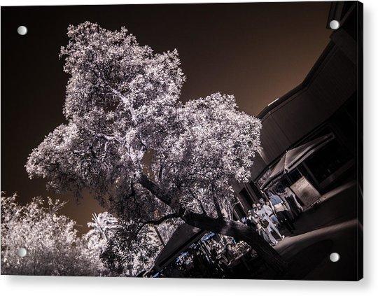 Lincoln Road Tree Acrylic Print