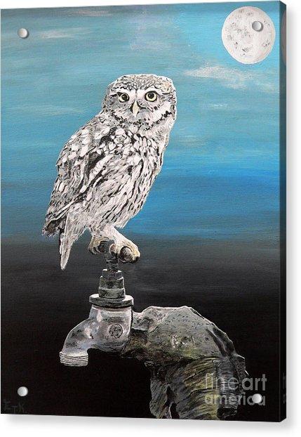 Little Owl On Tap Acrylic Print