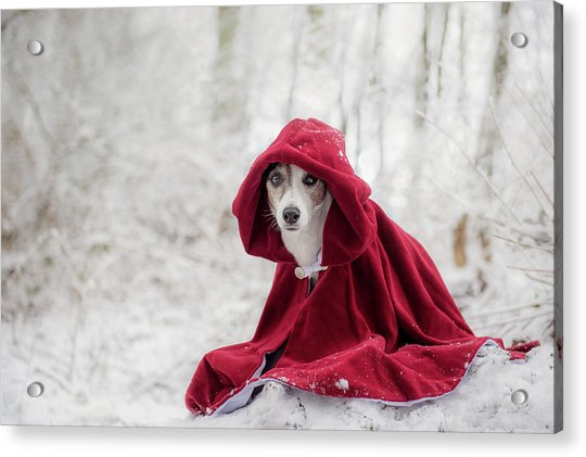 Little Red Riding Hood In Winter Acrylic Print