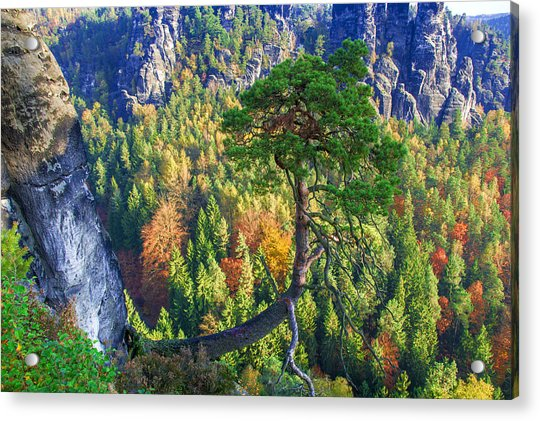 Lonely Tree In The Elbe Sandstone Mountains Acrylic Print