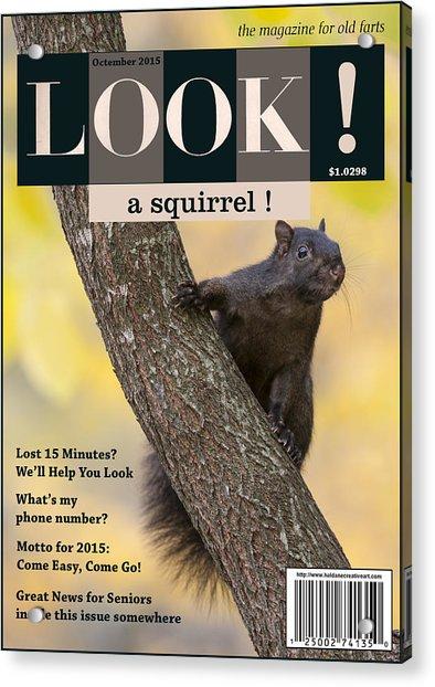 Look A Squirrel Acrylic Print