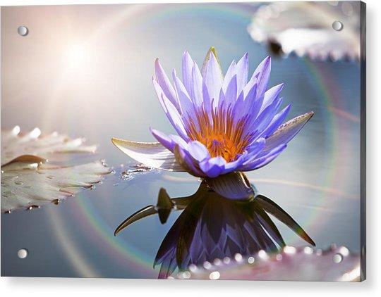 Lotus Flower With Sun Flare Acrylic Print