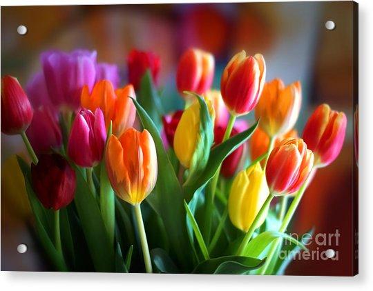 Lovely Tulips Acrylic Print