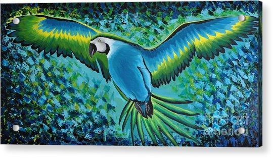 Macaw In Flight Acrylic Print