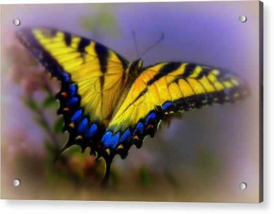 Magic Of Flight Acrylic Print