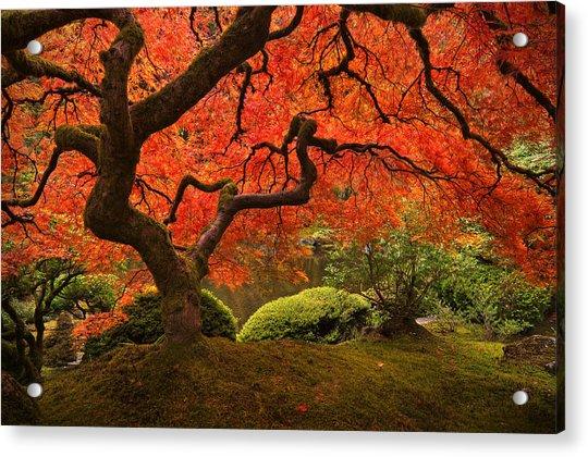 Magical Tree Acrylic Print