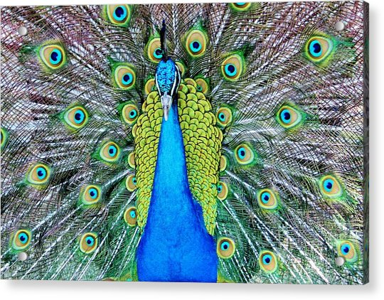 Acrylic Print featuring the photograph Male Peacock by Cynthia Guinn